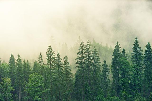 Četinarska šuma